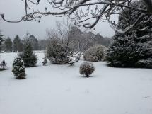 My garden in the snow